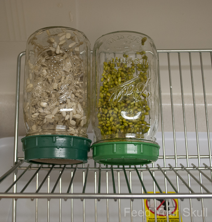 how to grow alfalfa sprouts in a jar