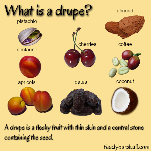 Drupe Fruits