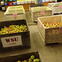 WSU Farm and Orchard Haul | Feed Your Skull
