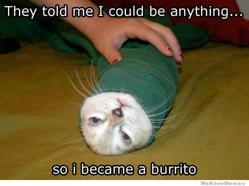 burrito-cat
